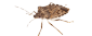 Stink Bug Prevention NJ | Stink Bug Prevention PA