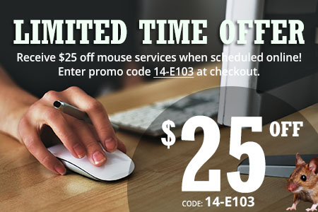 Buy Online 25 off - mouse