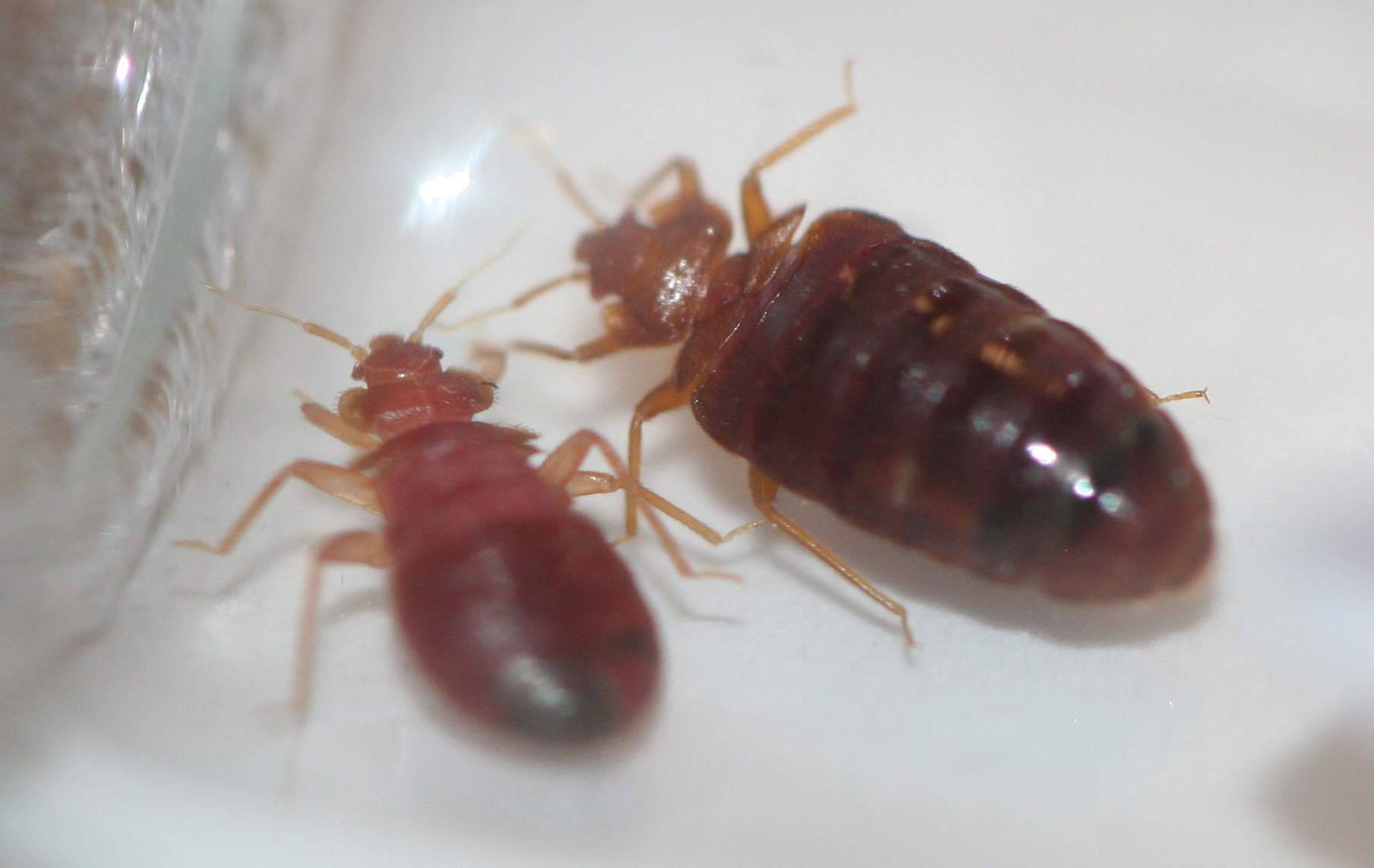 How Can I Get Rid of Bed Bugs in My Apartment